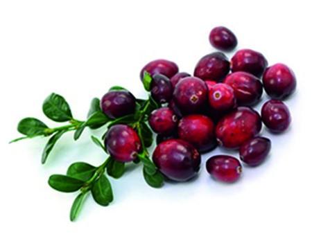 Cranberry-Früchtetee 20 FK in 100 Einzelbeuteln/5L